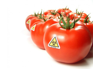 Genetically Modified Food Labels GMO